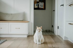 Causes of urine spraying in cats