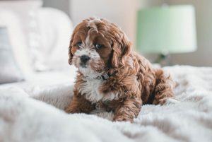 How to help prevent puppy accidents