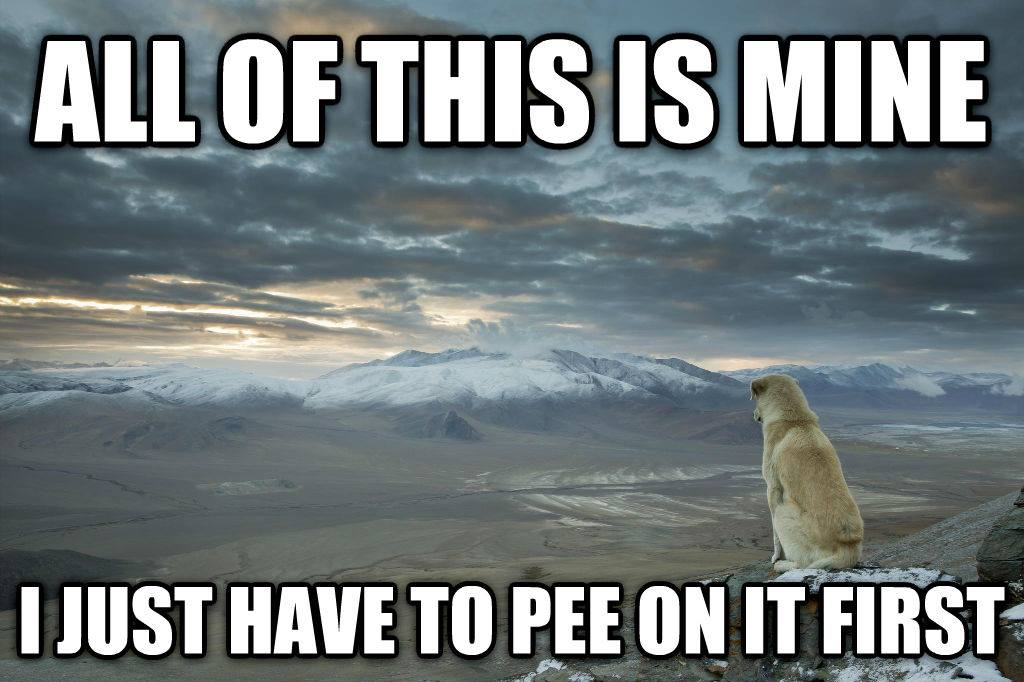 I just have to pee on it first meme