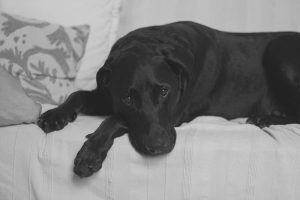 Managing bed wetting and incontinence problems in dogs
