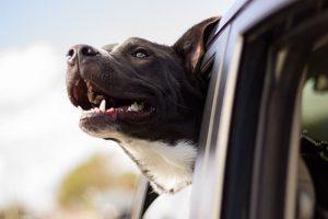 pet car trip urine free